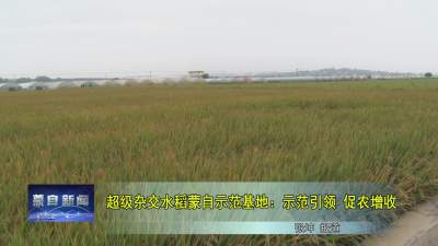 超级杂交水稻蒙自示范基地:示范引领 促农增收