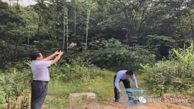 """瑞丽市森林公安局将日前案件中查获的28只""""野鸽子""""放归自然"""