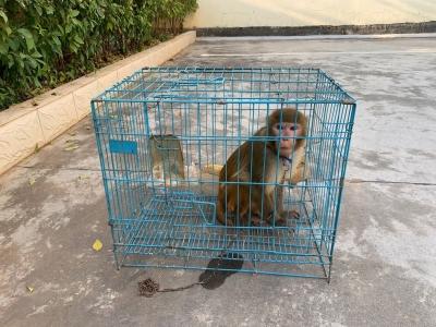 看到非法饲养野生动物? 请举报!