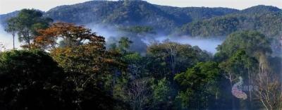 严密封控每一条进山通道 严查每一处火灾隐患!省林草局倡议24万护林员守好绿色家园