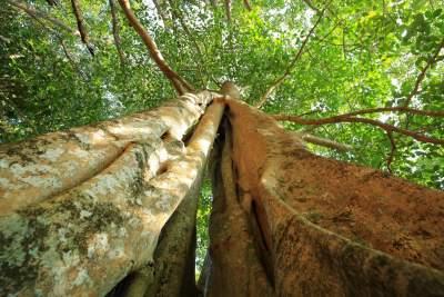 《瑞丽江》杂志--独树成林