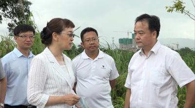 云南省副省长李玛琳到瑞丽调研
