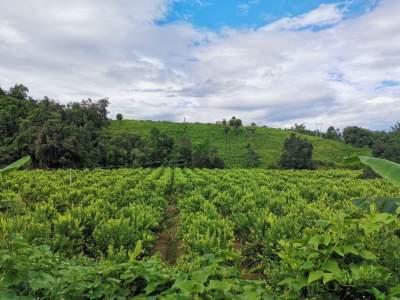 展销路,助发展,市人大开展柠檬产业调研