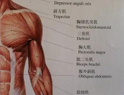 【安心宅家·快乐健身】5个动作,练出结实又强壮的手臂!