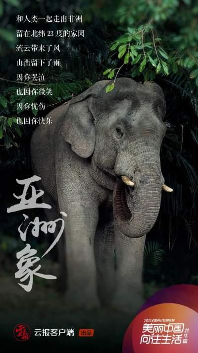 最新公告!做好亚洲象肇事防范与应急工作 目前省级工作组已赶赴现场