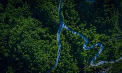 【国际植物日】原本山川,极命草木