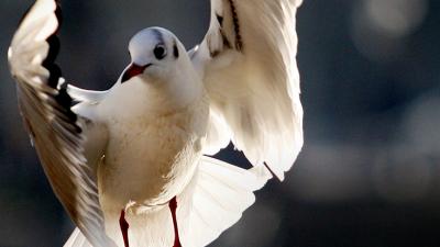 "【COP15】宝贝们,云南""萌宠""的祝福,请查收!"