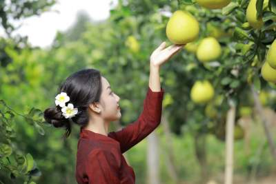 金秋时节,蜜柚飘香!弄岛镇第六届网络柚子节,欢迎你!
