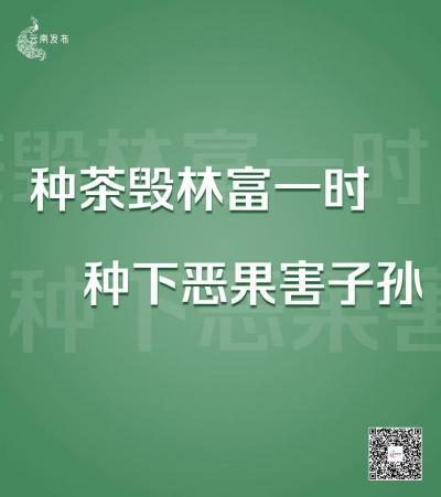 为期6个月!云南将严厉打击种茶毁林等破坏森林资源违法违规问题