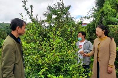 陇川县林草局积极推进经济高质量跨越式发展三年行动工作