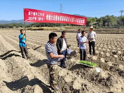 清平乡召开2021年产季烤烟大田整地理墒打塘移栽现场会