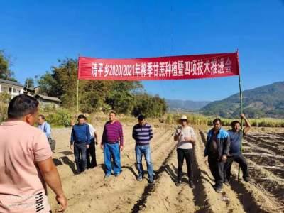 清平乡召开2020/2021年度榨季甘蔗种植暨四项技术推进会