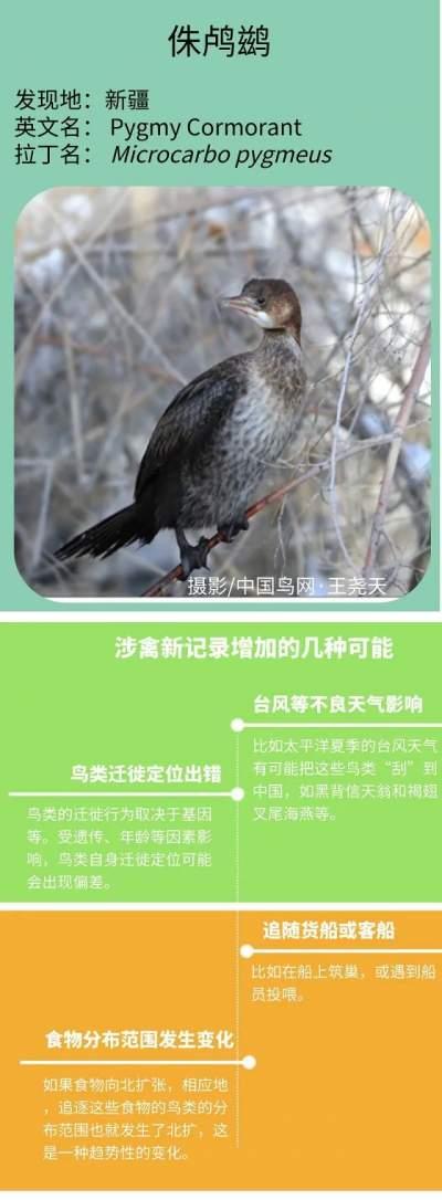 科普长图·野生动物丨中国鸟类新记录——涉禽篇