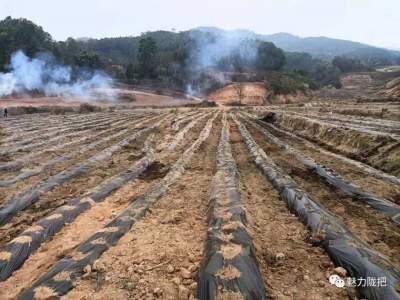 万亩桑园春耕忙:陇把镇拓展新桑园、改良老桑园正在如火如荼进行