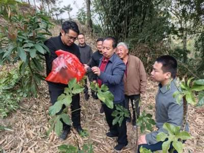县委书记李林山调研王子树乡农业特色产业