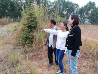 你的甘蔗落实得几亩了?——章凤镇近期最流行的问候语