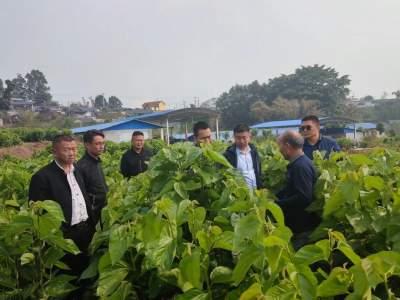 深入调研,全力推动王子树乡经济社会高质量跨越发展