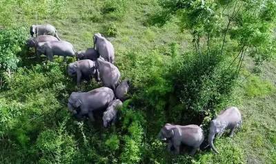 人象共生 和谐家园