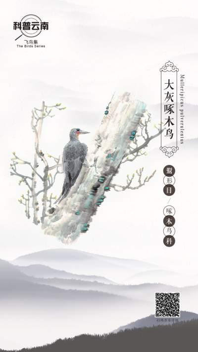 #相约COP15#科普云南 | 飞鸟集——啄木鸟科·大灰啄木鸟