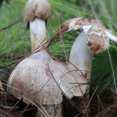 #相约COP15#生态云南 | 大自然的馈赠——鸡枞菌