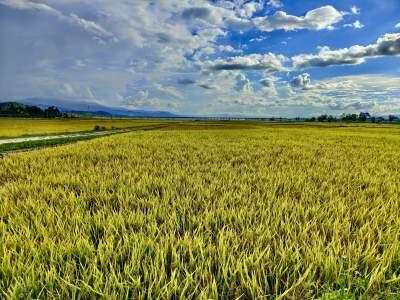 城子镇万亩稻田喜获丰收,颗粒归仓