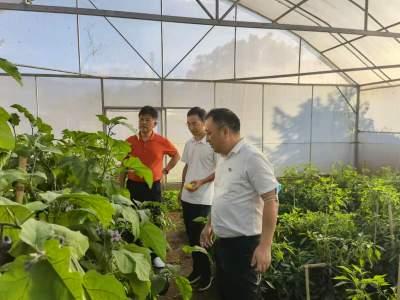 学史力行 |省政协副主席黄毅到勐约乡调研指导工作