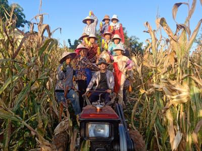 学史力行 |热火朝天收玉米,把党建融进农忙里
