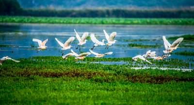 打造生态新地标,看普者黑国家湿地公园这样发力