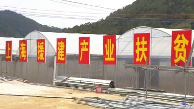"""沪滇扶贫协作产业项目在温浏乡""""落地生根""""见成效"""