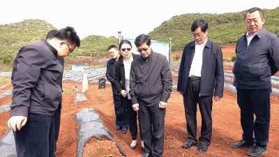 陈江华到丘北县调研烟叶生产工作