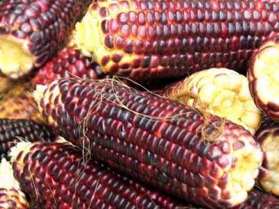 """丘北紫黑糯玉米产业实现种植、加工""""一条龙"""""""