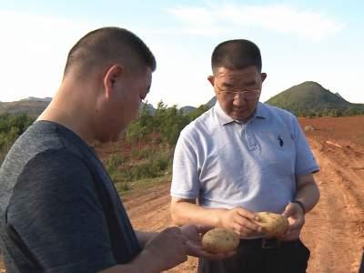 秦文波调研农村人居环境和农业产业发展工作