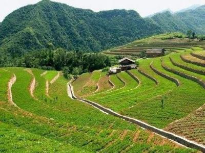 农业农村部:对改变用途的耕地不再给予补贴,对撂荒一年以上的取消次年补贴