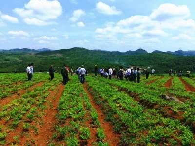 丘北县2021年大春作物栽种49.5万亩