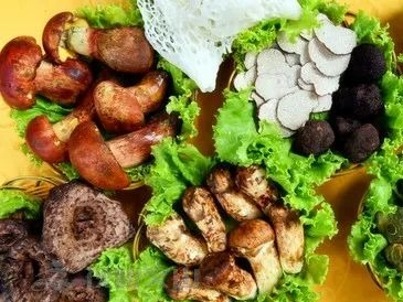 文山州人民政府食品安全委员会再次发布食用野生菌中毒防控预警通告