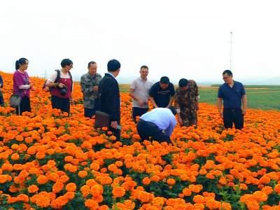 丘北县文联到腻脚乡开展产业采风活动
