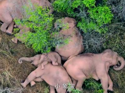 云南超萌公益童谣《小象宝》点击破亿,英语版创作海选小歌手