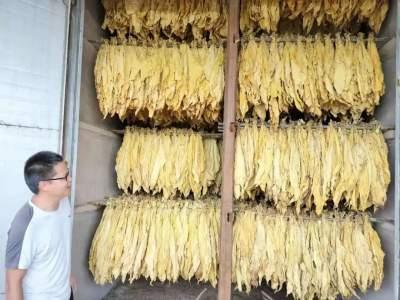 """丘北县腻脚乡""""六力齐发""""推动烤烟产业规范化发展"""