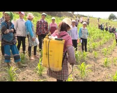 红河县农业农村和科学技术局举办草地贪夜蛾防控和监测技术培训