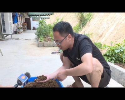 红河县发展黑水虻养殖    探索循环经济产业易地集中式扶贫新路子