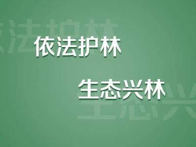 【海报】破坏森林,依法入刑!这7条标语请牢记