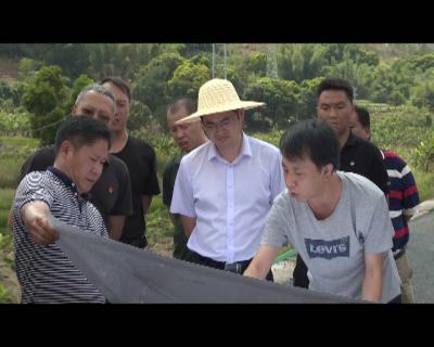 和涛调研勐甸湖片区道路建设推进情况