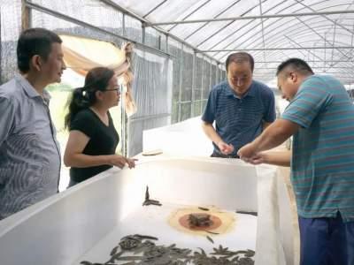 张智俊到红河县育苗中心菲牛水蛭养殖大棚专题调研水蛭产业发展情况