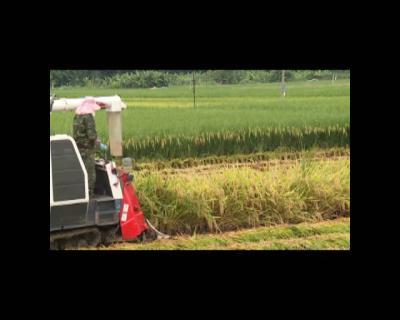 红河谷迎丰收    机械进农田 大大提高水稻收割效率