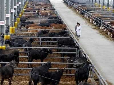 """""""牛""""!前3名每年奖补500万,红河县养牛的速看"""