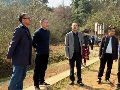 张智俊调研红河谷高山植物园规划建设工作情况