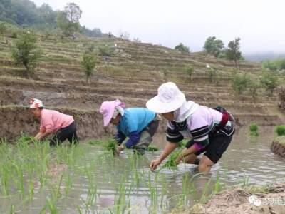 红河县:春耕春种正当时 不负农时不负春