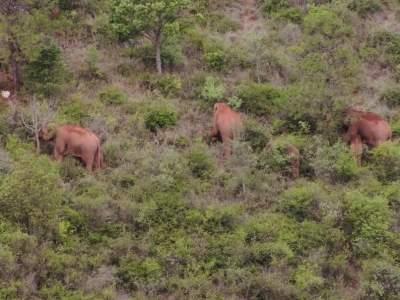 象群向南迁移返回峨山
