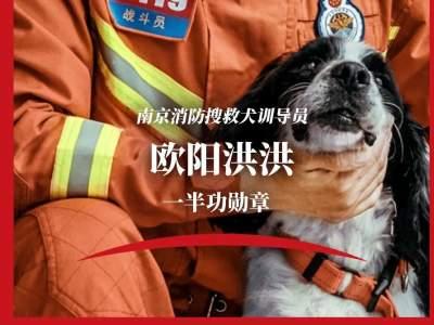 和我一起参加汶川地震救援的搜救犬,就剩它了