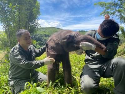共建地球生命共同体丨云南:多举措守护亚洲象